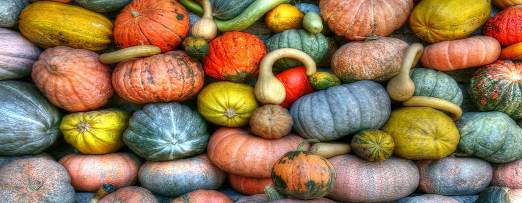 Colorado gourds